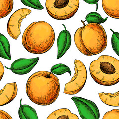 Apricot seamless pattern. Vector drawing . Hand drawn fruit and