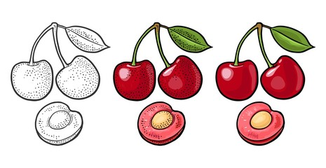 Whole and half cherry berry with leaf. Vector engraving