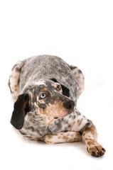 Ängstlicher Mischlinghund isoliert auf weißem Hintergrund