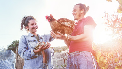 Happy couple picking up fresh organic eggs in henhouse farm at sunset Wall mural