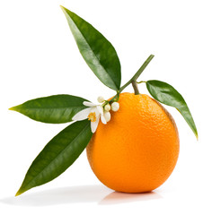 Orange with flower and leaves.