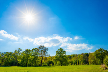 Fototapete - Summer meadow with green trees and a wonderful blue sky with bright sun