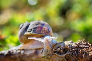 Springtime. Macro shot of a snail