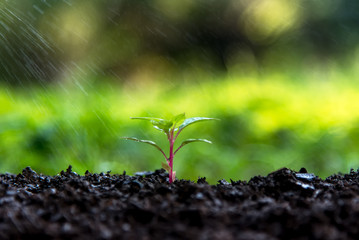 New life  in the green world.  Watering young plants.  Ecology Concept. select focus