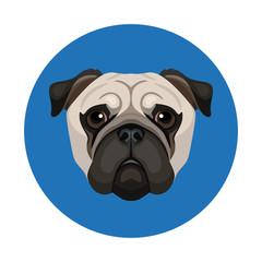 Vector cute pug face icon dog breed illustration