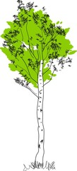 Stylized birch tree with green crown and white trunk