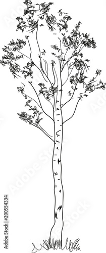 Stylized Birch Tree Coloring Page