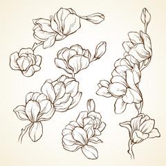 Set of flowers magnolia. Sketch vector illustration.