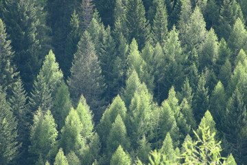 Green pine woods pattern, beautiful abstract background
