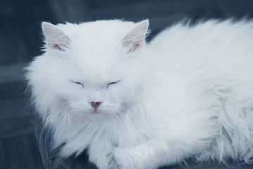 stock-photo-white-cat-lying-down-and-sleeping-relax