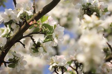 цветы весной есть место для надписи