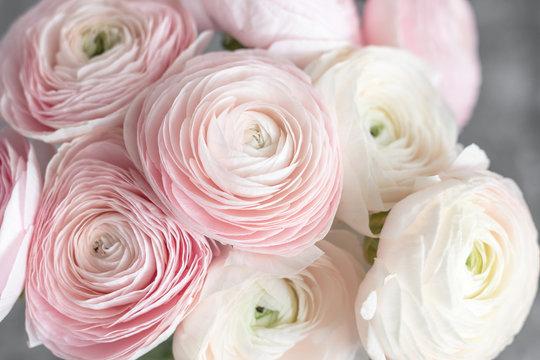 many layered petals. Persian buttercup. Bunch pale pink ranunculus flowers light background. Wallpaper, Horizontal photo