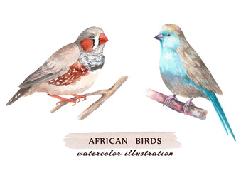 Set of african birds. Watercolor illustration, isolated on a white background.