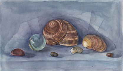 Sea still life. Seashells drawing watercolor.