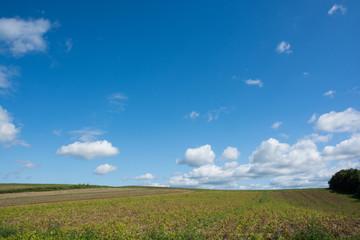 秋の野菜畑と青空