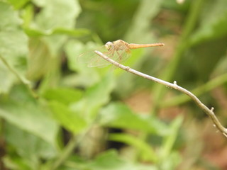 dragonfly with blurred background