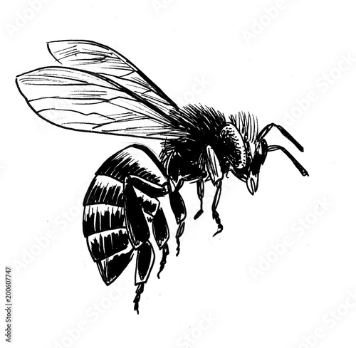 """""""Ink Black And White Illustration Of A Flying Bee"""" Stock"""