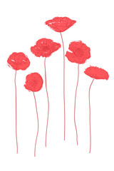 Red poppies concept