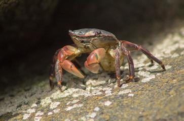 Crab in California