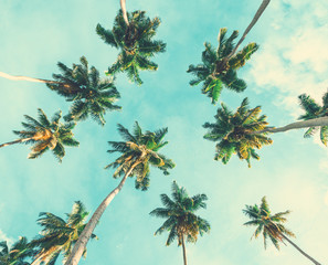 Wall Mural - Coconut palm trees on sky background. Toned image.  Low Angle View.