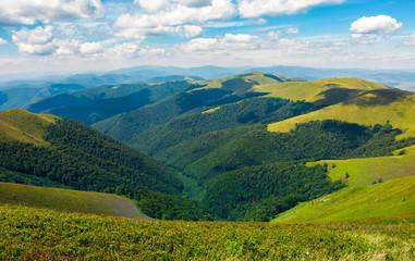 rolling hill of Carpathian mountains. beautiful summer landscape