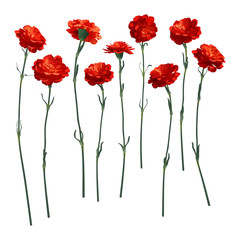 Vector carnations, a set of nine different flowers