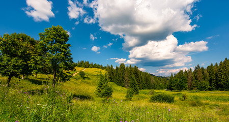 grassy meadow among the forested hills. beautiful summer landscape under the blue sky with row of clouds