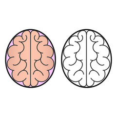 Human brain view from the top of the icon or concept for the logo.