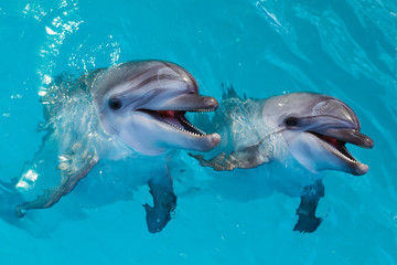 Keuken foto achterwand Dolfijn Group of cute smart dolphins in the ocean