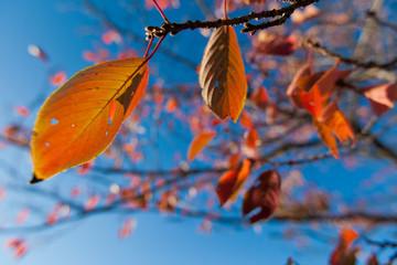 秋の紅葉と青空