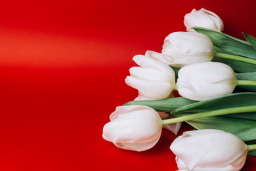 a bouquet of white tulips on a red background, holiday, gift, place for text