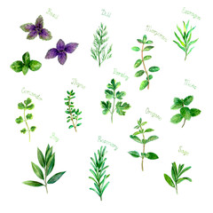 Herbs spices watercolor green fresh set on white