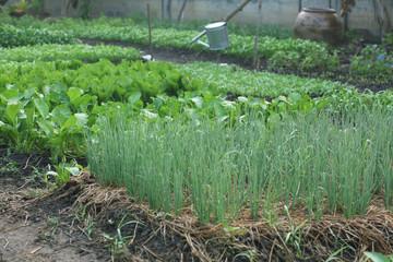 vegetable garden color green
