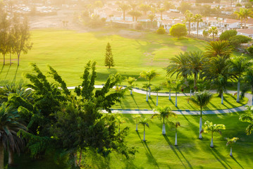 Above view on palm trees on green golf court.