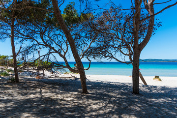 Pine trees and white sand in Maria Pia beach