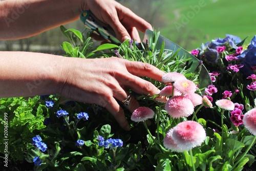 Fruhling Ist Pflanzzeit Den Balkon Mit Blumen Und Krautern