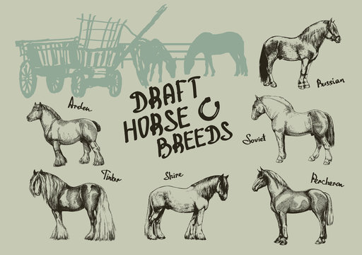 set farm horse, shire, tinker, russian, soviet, percheron, arden