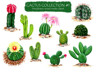 Set of High Quality Hand drawn Cactus Plants Clipart for multiple design projects