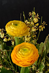 Fine art still life natural floral color close up of a flower bouquet with yellow and orange buttercups on black background