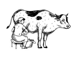 Woman milk cow engraving vector illustration