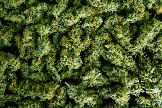 Background of flower buds cannabis, marijuana, weed top view copy spase