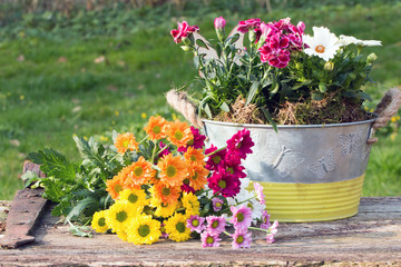 Bunte Blumen im Frühling auf altem Holzbrett im Garten