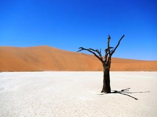 Dead Tree Namibia