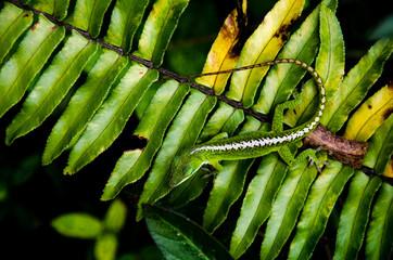 Hidden lizard resting on leaves.