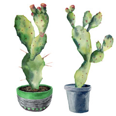 Watercolor green cactuses in a flowerpot. Hand painted opuntia with flowers isolated on white background. Illustration for design, print, fabric or background.