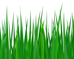 Seamless green grass isolated on white background