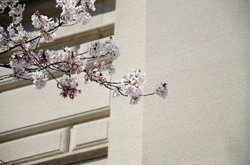 Flowers and architecture 2