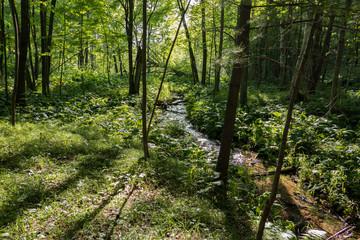Stream hidden in the woods.
