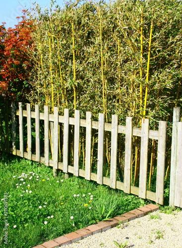 barrière en bois devant haie de bambous,clôture de jardin\