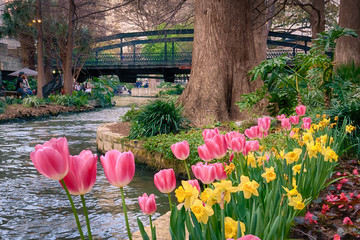 Spring Flowers on the Riverwalk